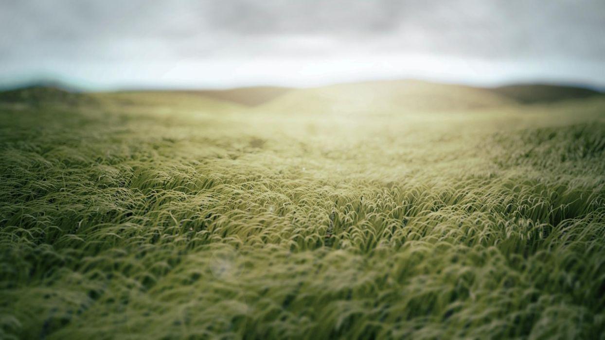 grass fields wallpaper