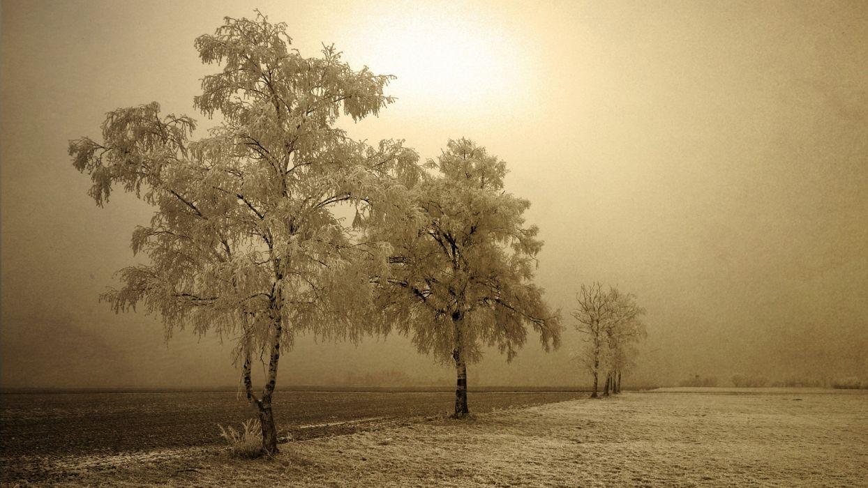 landscapes winter trees wallpaper