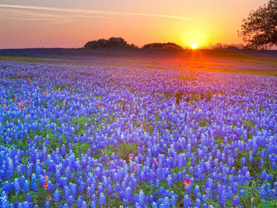 Country Texas Bluebonnet wallpaper