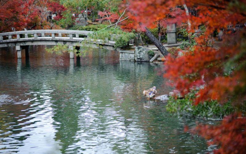 Japan autumn leaves garden wallpaper