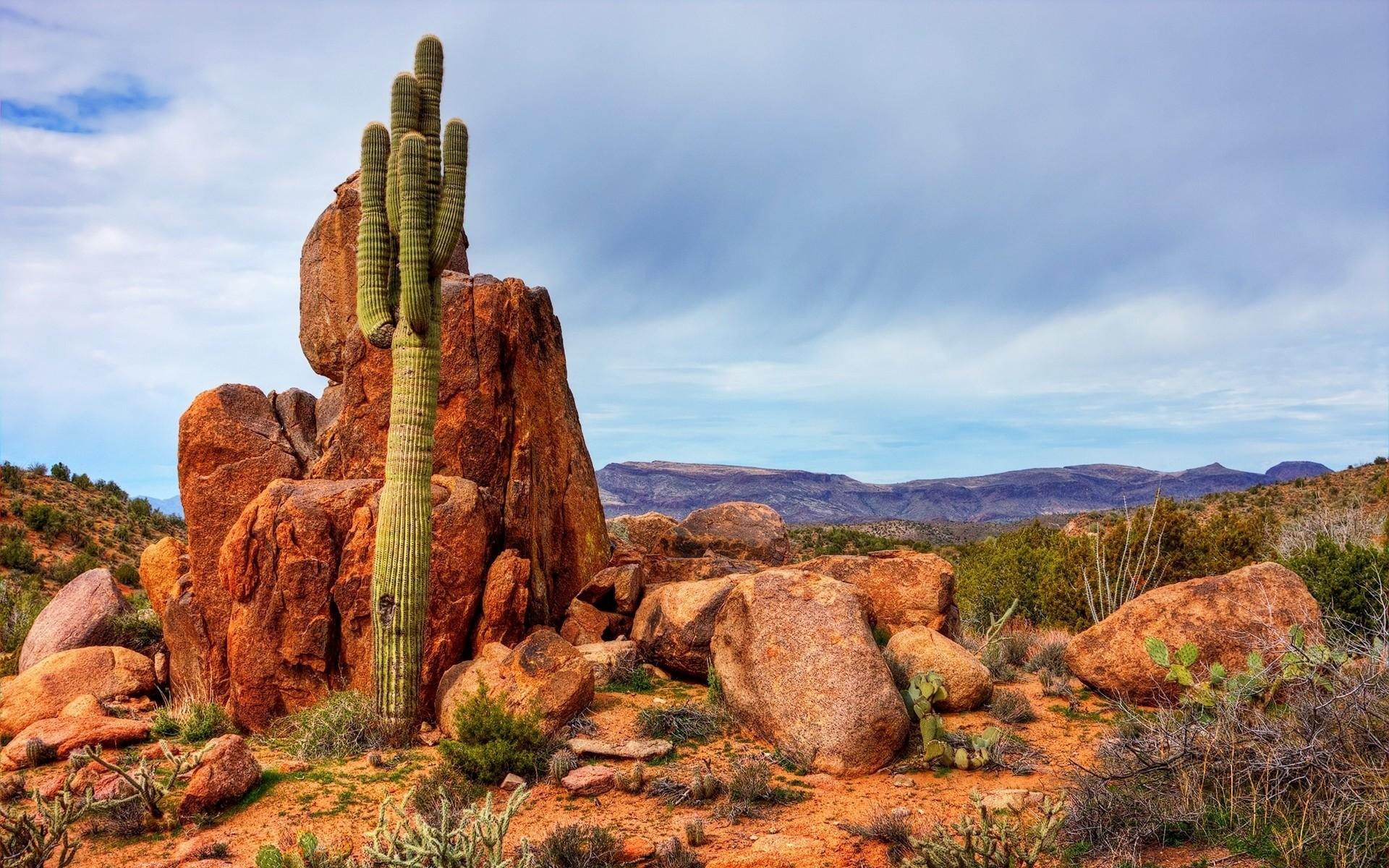desert wallpaper cactus hd - photo #43