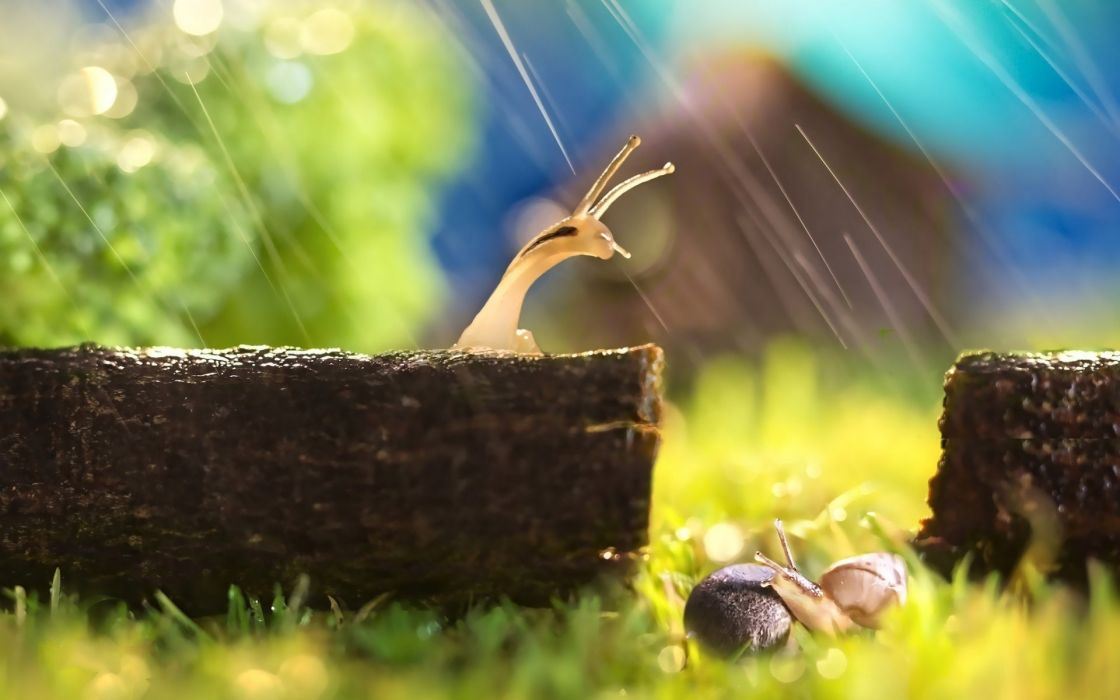 nature animal snail ice resting rain green hd wallpapers wallpaper
