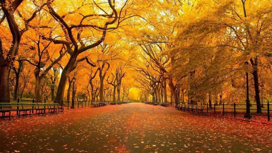 streets Central Park wallpaper
