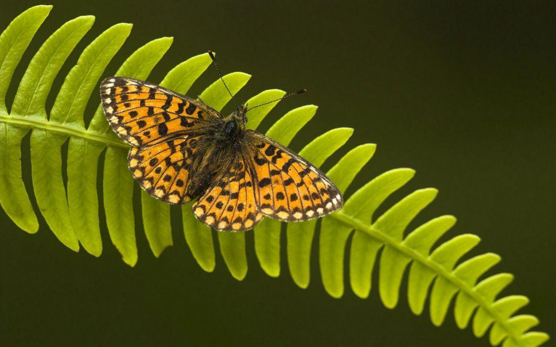 insects ferns butterflies wallpaper