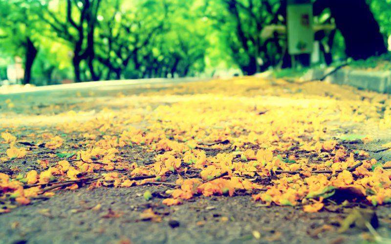 paths wallpaper