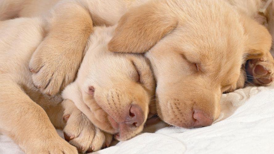 animals dogs sleeping wallpaper