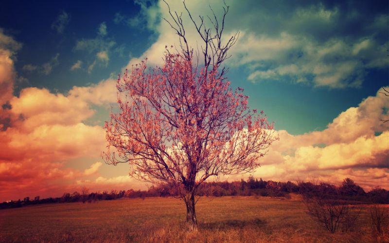 clouds trees fields skies wallpaper