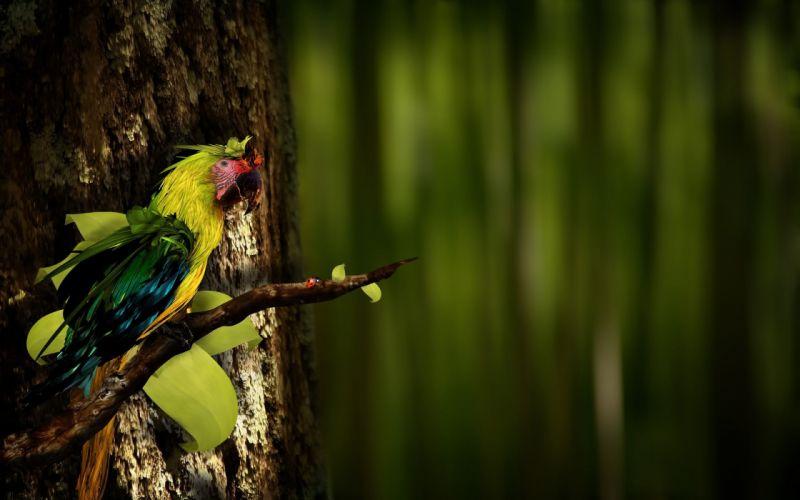 nature birds parrots wallpaper