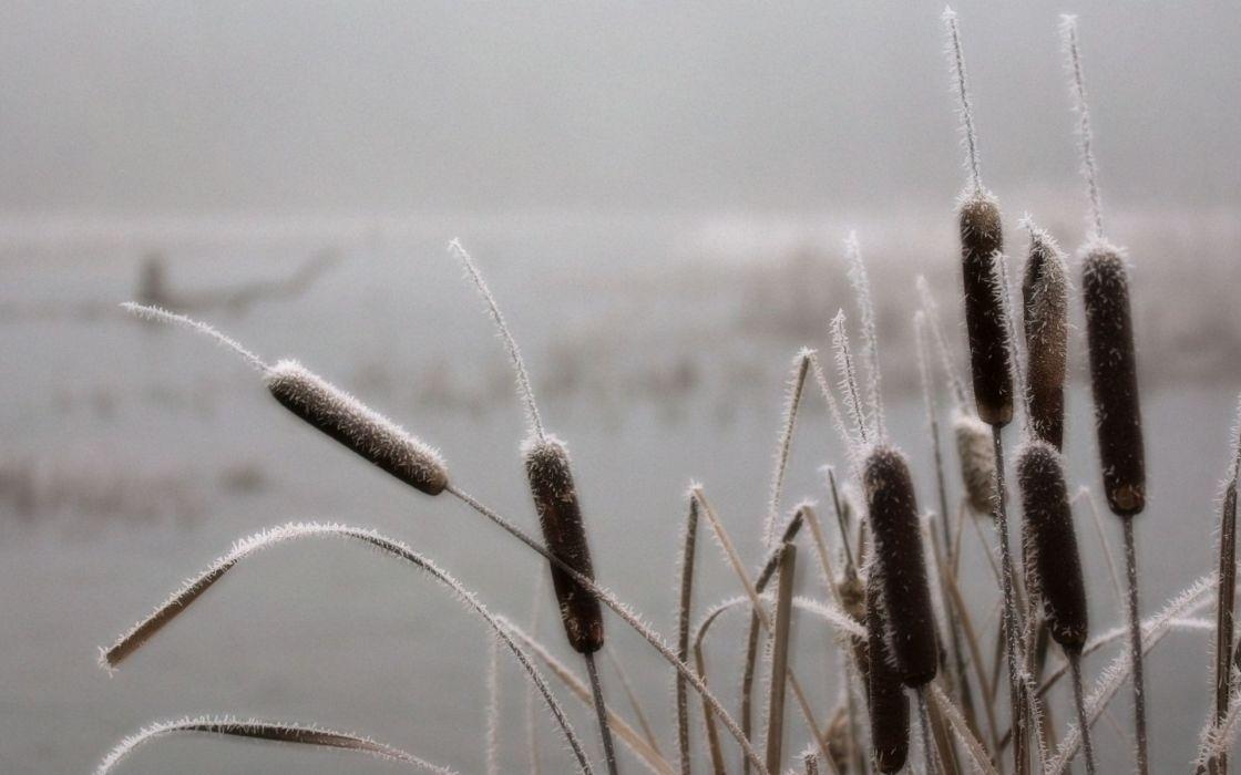 nature winter plants pale frost wallpaper