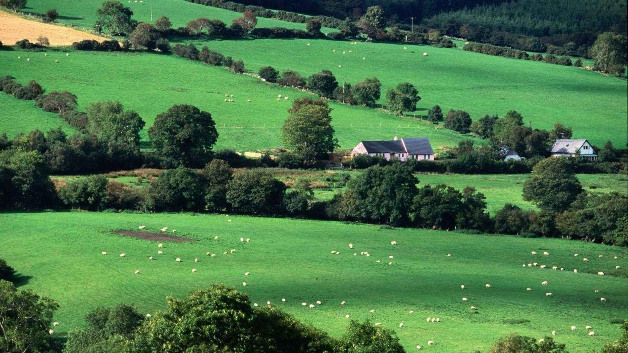 fields Ireland wallpaper