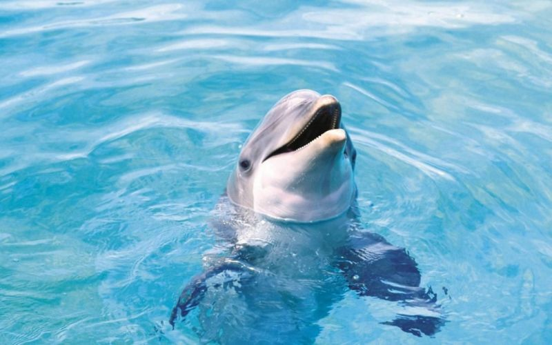 water ocean animals dolphins sea wallpaper