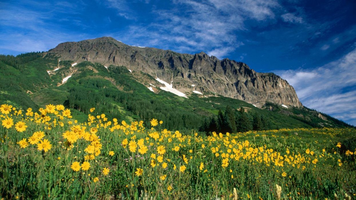 landscapes nature trees forests Colorado wallpaper