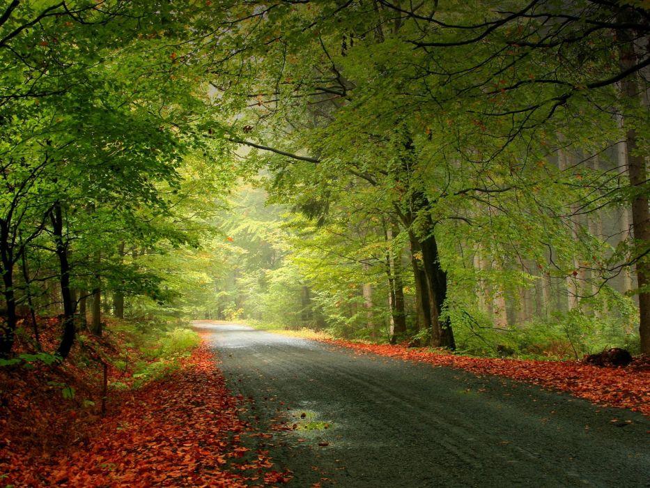nature autumn roads wallpaper