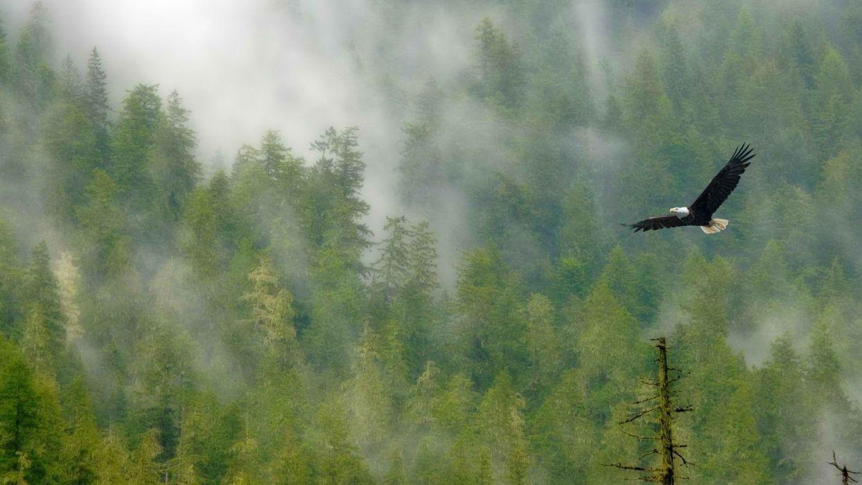 forests bald eagles National Park Mount wallpaper