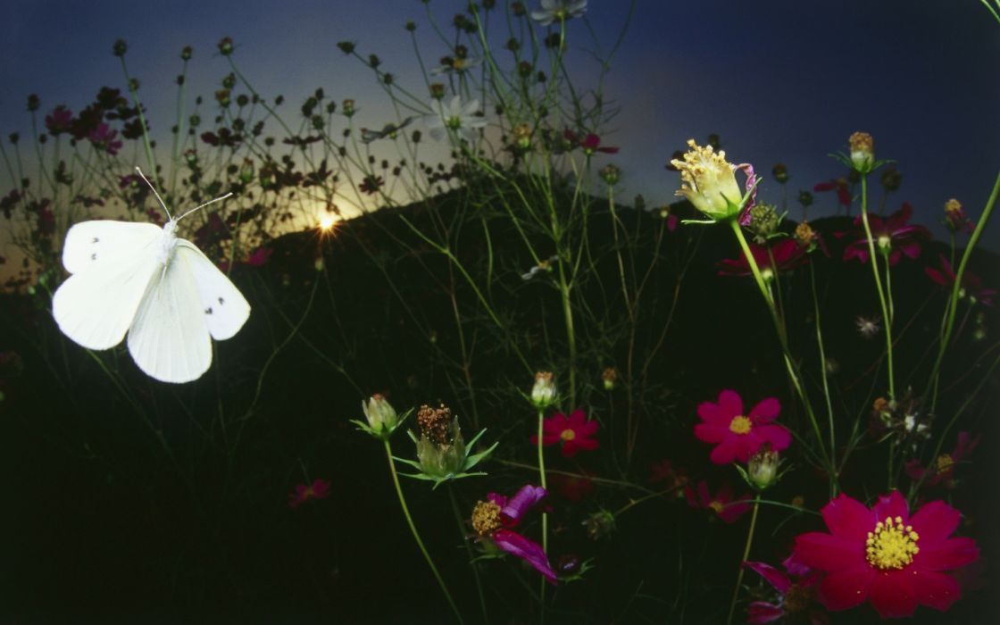 nature white flowers insects butterflies wallpaper