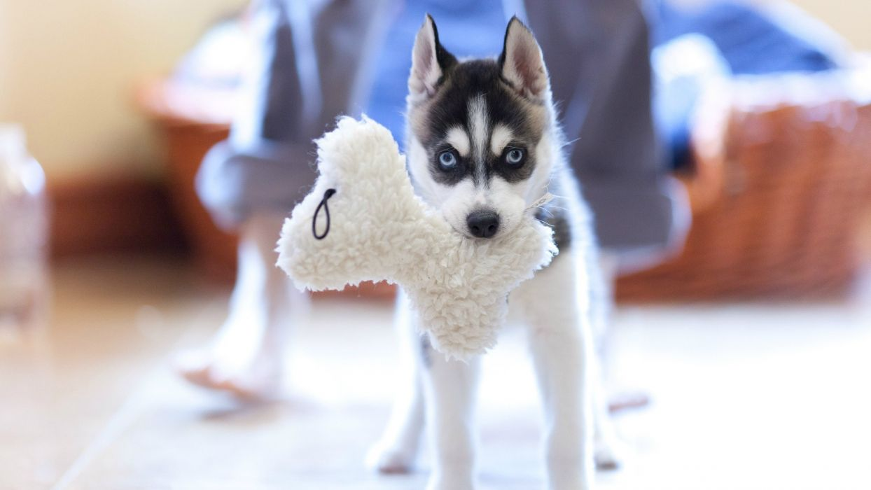 nature animals dogs puppies wallpaper