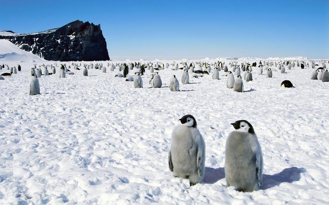penguins Happy Feet emperor Antarctica wallpaper