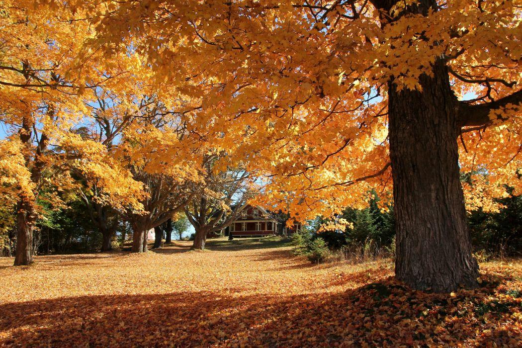 autumn park house trees landscape wallpaper