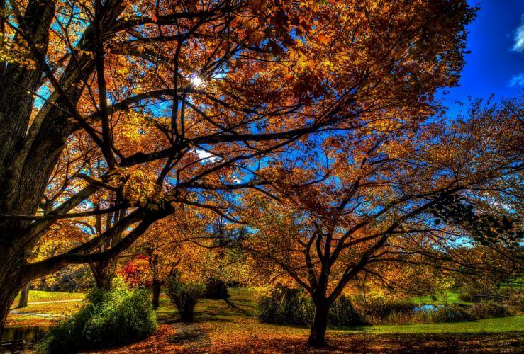 autumn trees park landscape t wallpaper