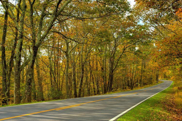 autumn trees road landscape wallpaper