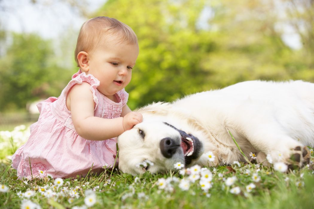 beautiful girl play child grass flowers baby childhood happy dog mood wallpaper