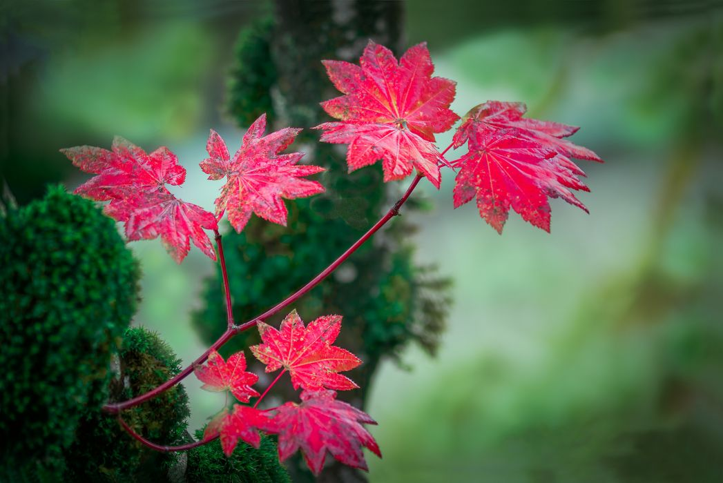 bokeh branch leaves red autumn background wallpaper