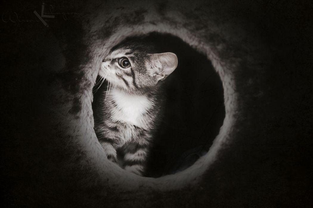 cute dark kitten cat mysterious wallpaper