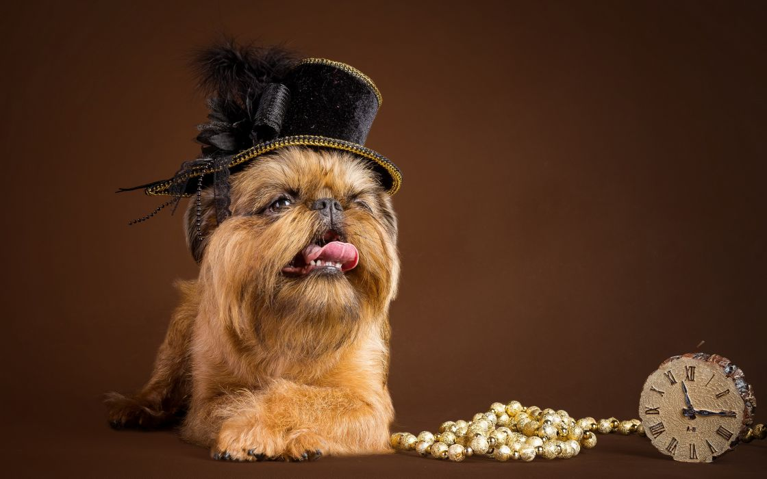 dog hat watches necklaces wallpaper