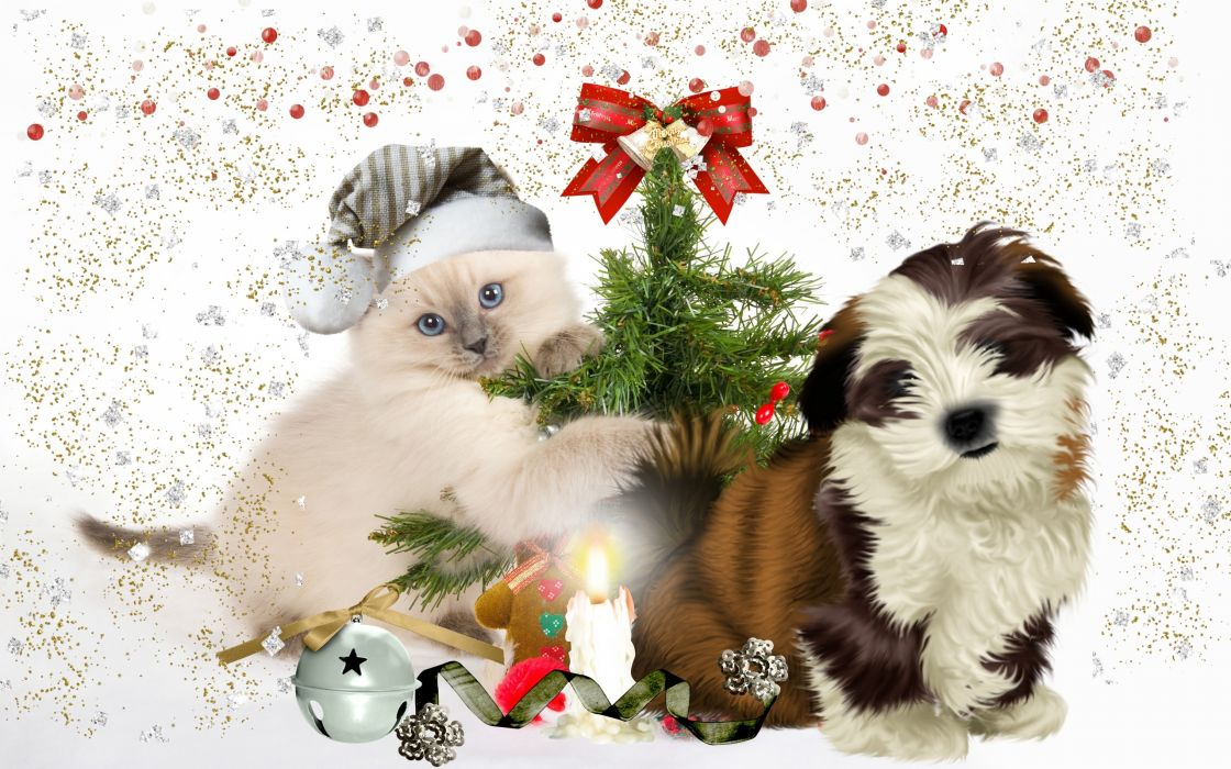 dog puppy kitten tree wallpaper