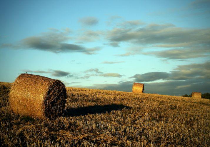 field harvesting rolls evening wallpaper