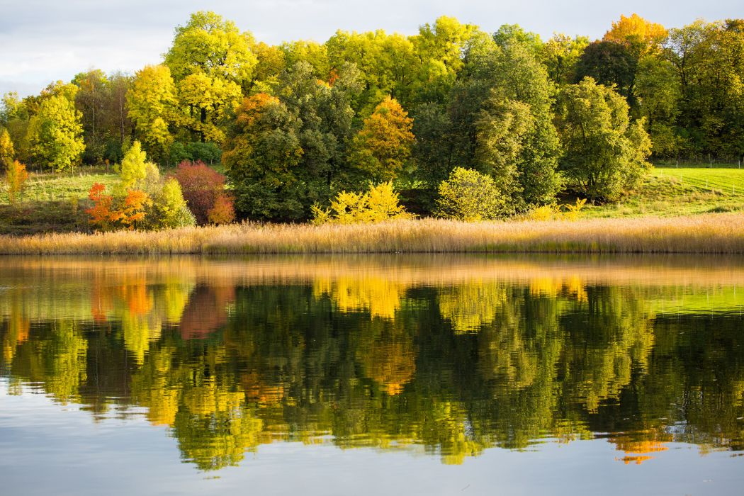 forest lake autumn reflection wallpaper