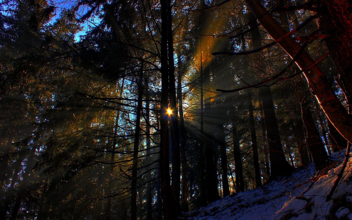 forest rays morning sun nature landscape wallpaper