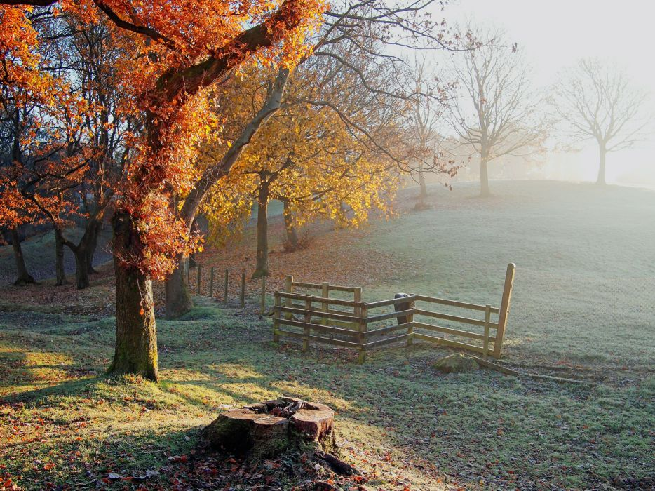 hill trees fence stump frost frost autumn wallpaper