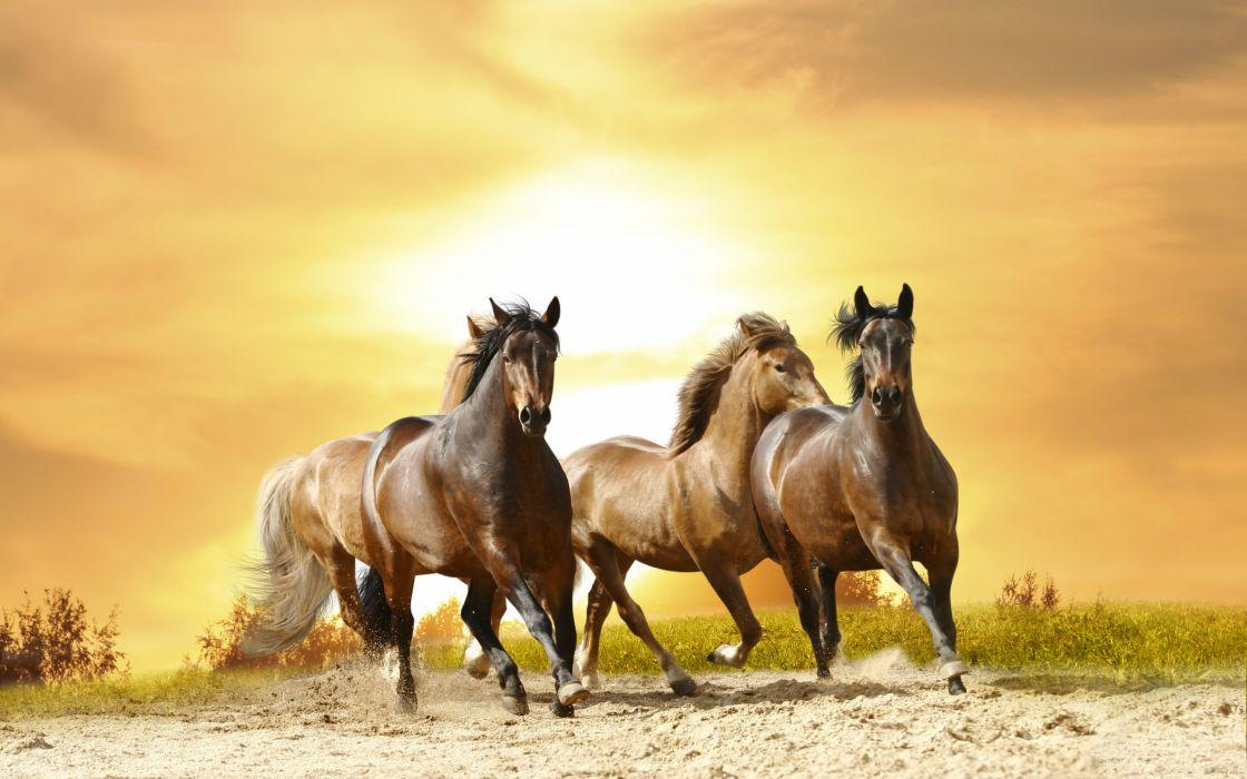 horse black sunset wallpaper