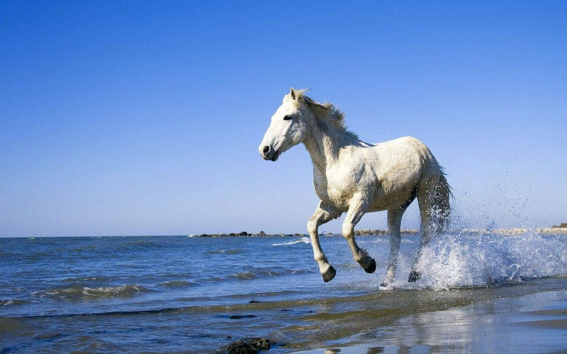 horse wet water spray white galloping wallpaper