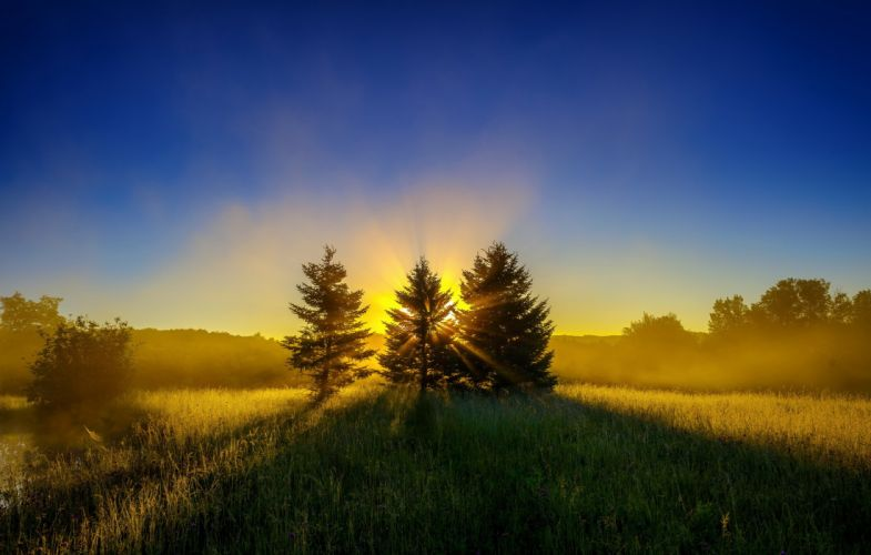 meadow rays forest sunrise trees sun wallpaper