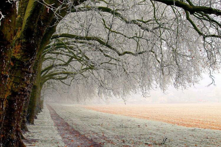nature frost branches field forest wallpaper