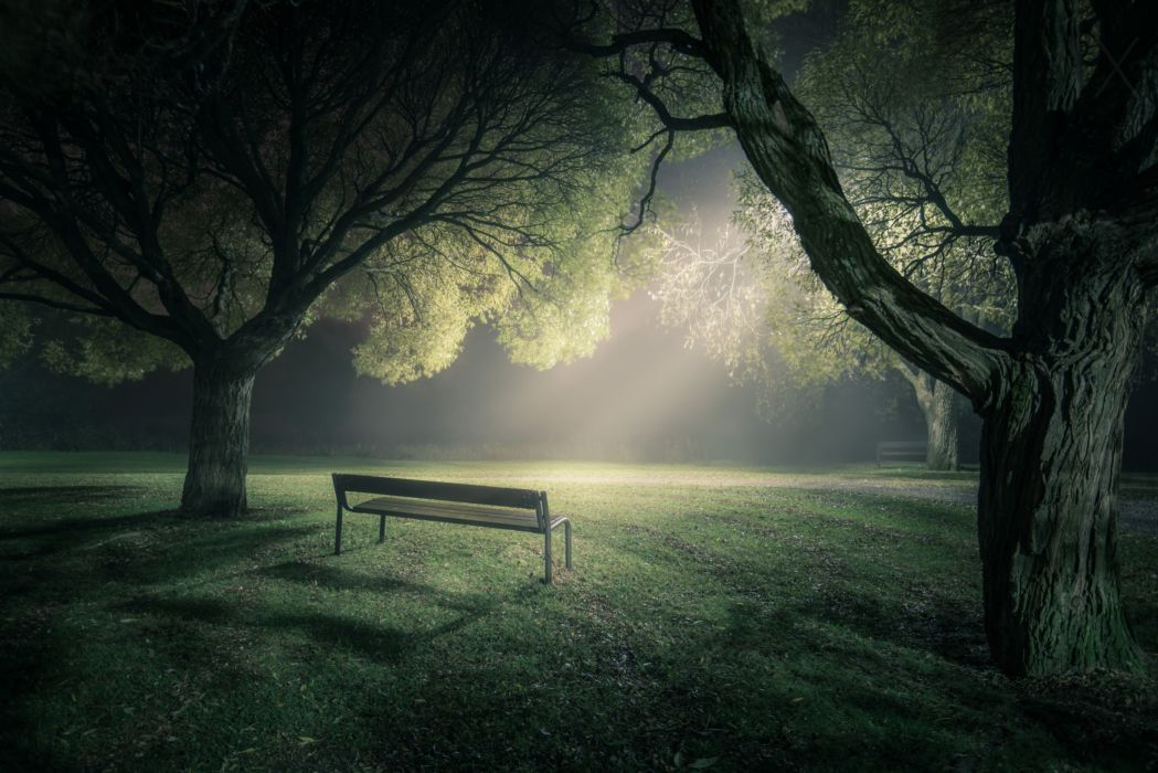park bench fog trees light mood wallpaper