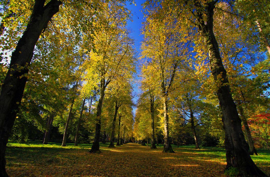 Park Arboretum road alley autumn wallpaper