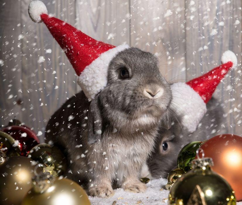 rabbits hats balls wallpaper