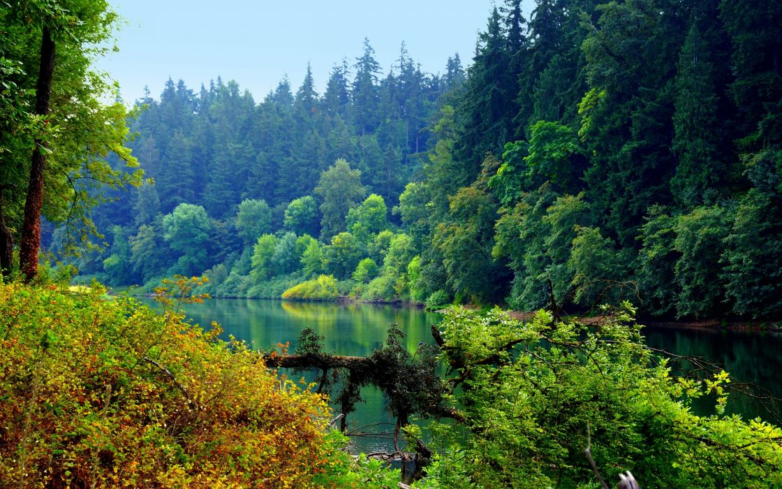 river forest trees landscape wallpaper
