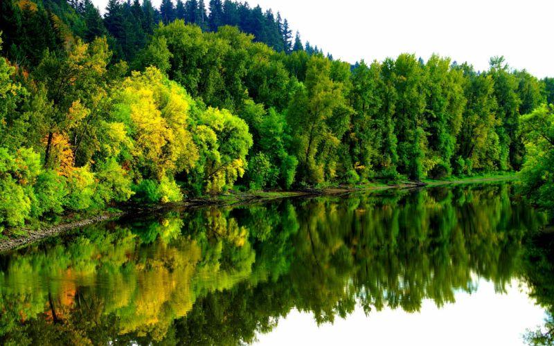 river forest autumn trees landscape wallpaper