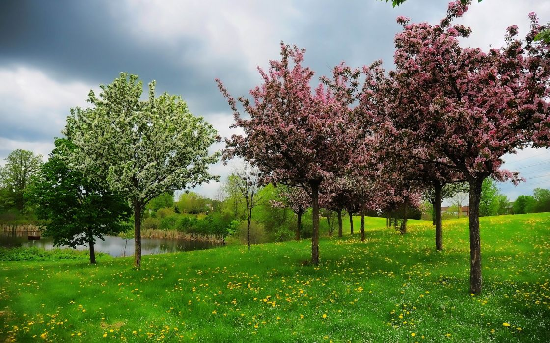 spring pond hill trees landscape wallpaper