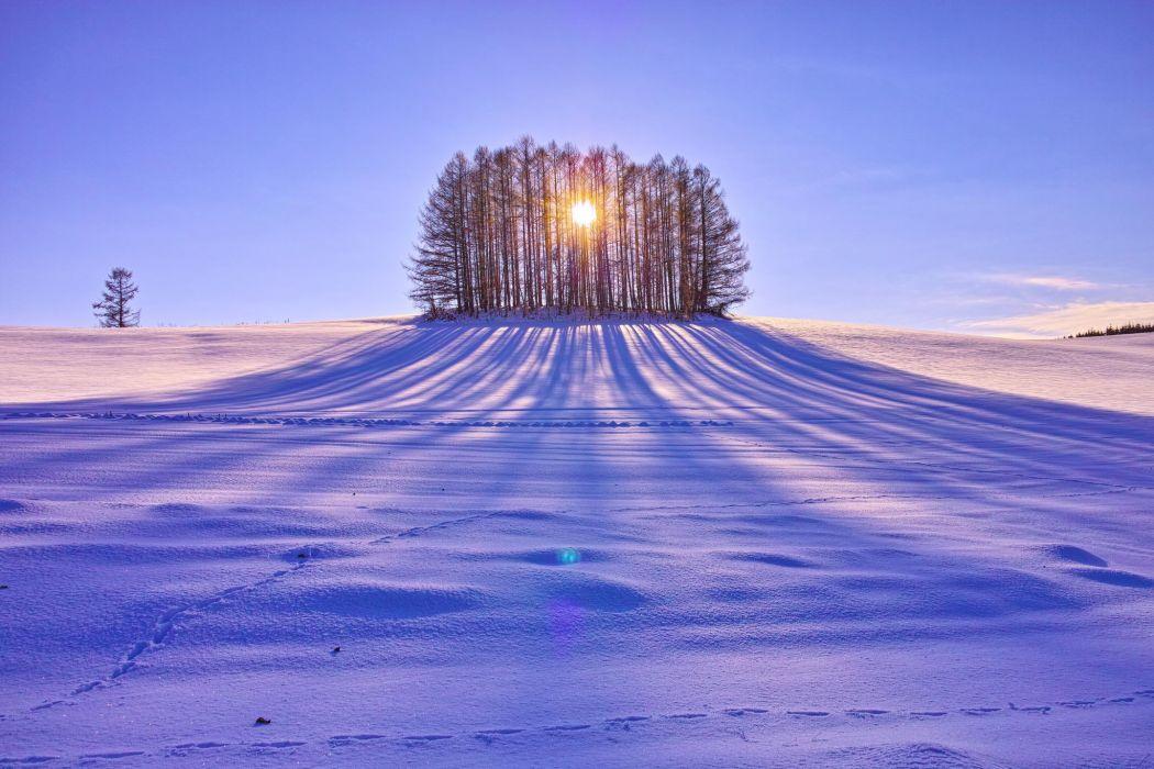 sun trees day field snow wallpaper