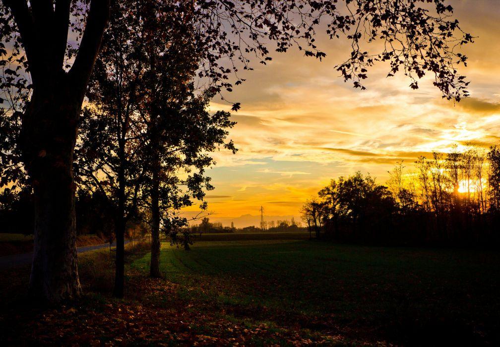 sunset field trees evening autumn wallpaper