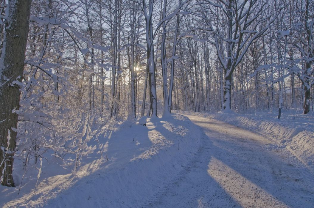 winter forest road trees landscape wallpaper