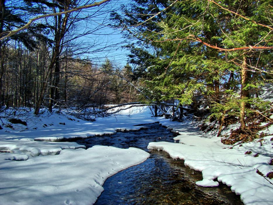 winter forest river nature wallpaper