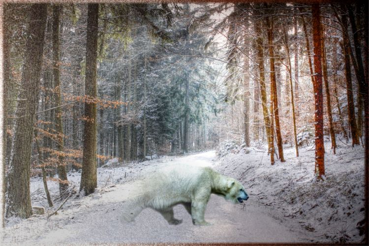 winter forest trees polar bear hdr photoshop wallpaper