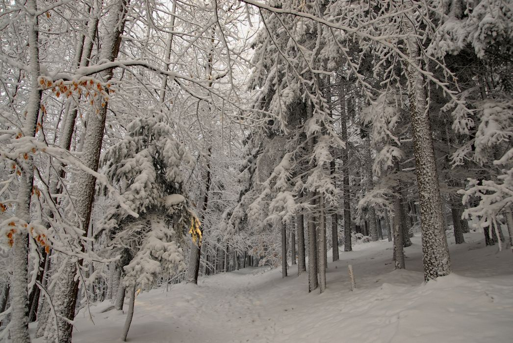 winter forest trees road nature wallpaper