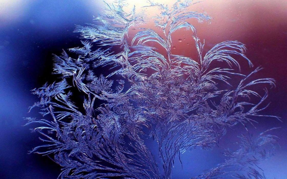 winter frost patterns glass wallpaper